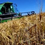 Cубсидии для сельского хозяйства на развитие: как получить ?